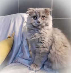 Raquel, chaton de Mila