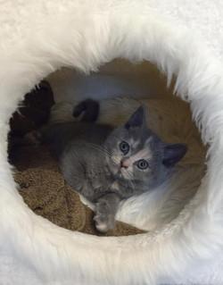 Rubie, chaton de Mila