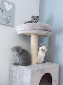 Rory, Raquel et Ramsès II; portée de Mila