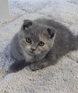 Rory, chaton de Mila