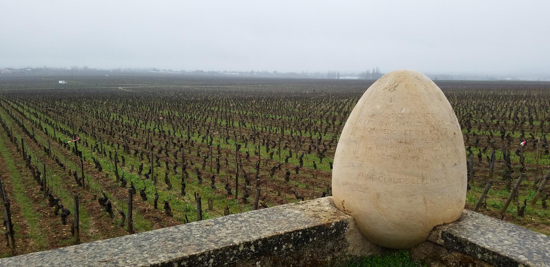 Vigne Côtes de Beaune