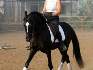 Violaine, or how a French trainer made a successful Marwari dressage horse