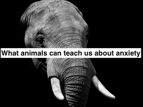 What animals can teach us about anxiety