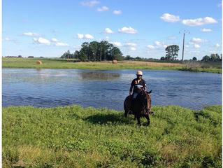 10 ways volunteering helped us build our horse business