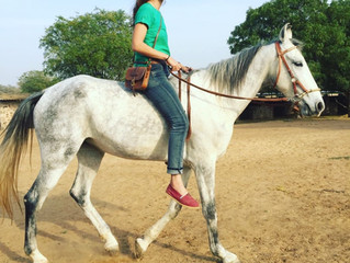 The legend of the Marwari horse
