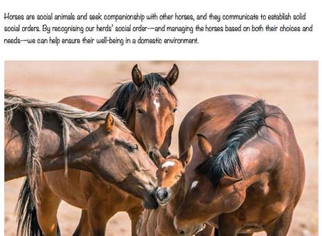 Part 2. Life in the herd