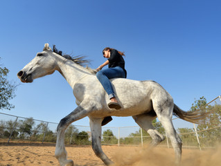 Why natural horsemanship is not the same thing as trick training