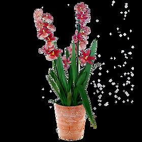 bouquet de fleur cambria nelly isler | c