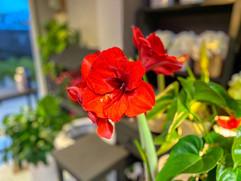 fleur christi'flor