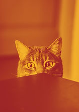 selective%20focus%20photography%20of%20gray%20cat%20peeking%20at%20the%20table_edited.jpg
