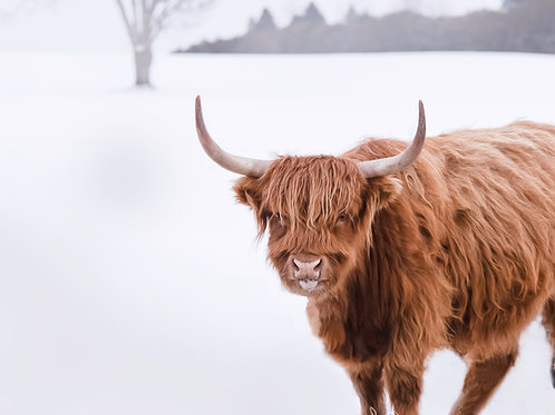 Cheeky Coo in the Snoo