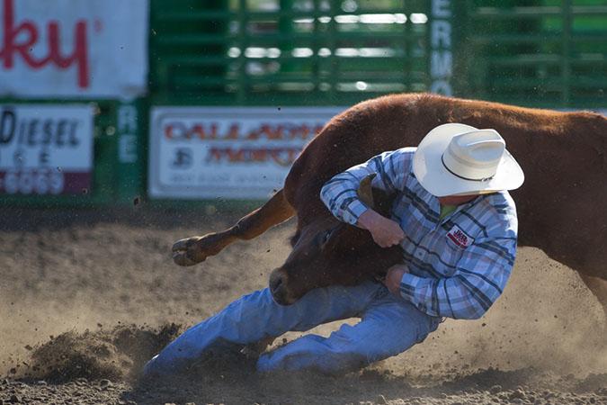 Wrestle that Steeer!