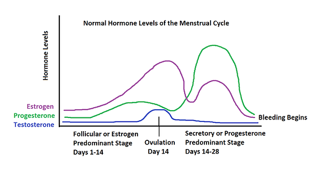 What are Female Hormones and How Do They Become Imbalanced