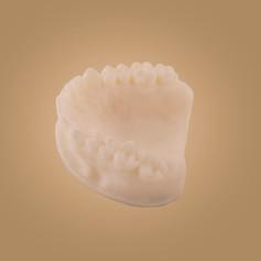 Zahnmodell - Ansicht oben