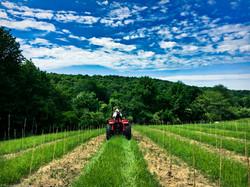 Planting the Lower Vineyard