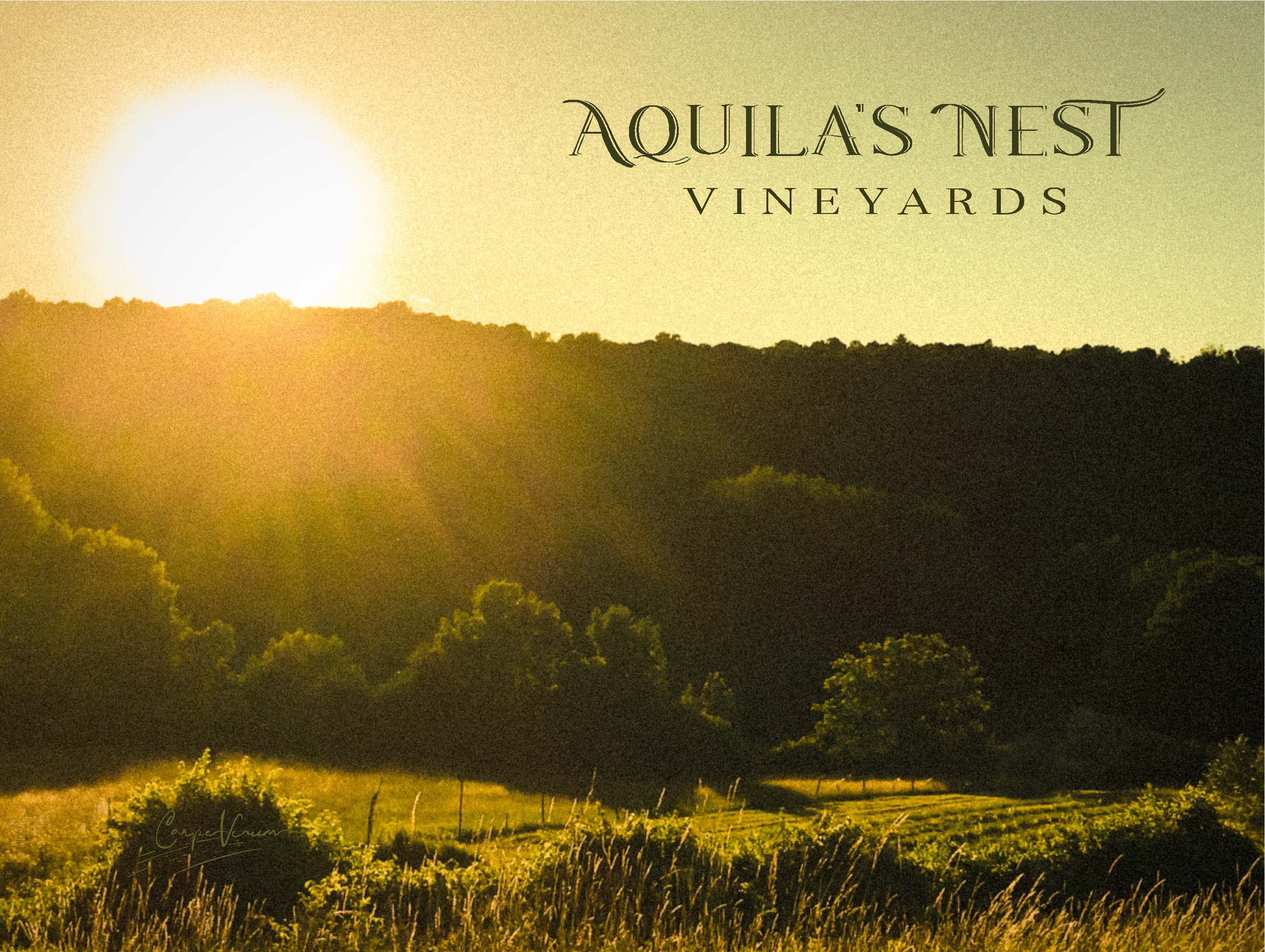 Aquila's Nest Vineyards Sunst
