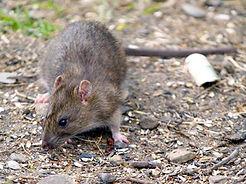 Lantra Pest Management Level 2 Simply Sa