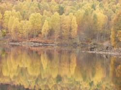 Scottish Loch side