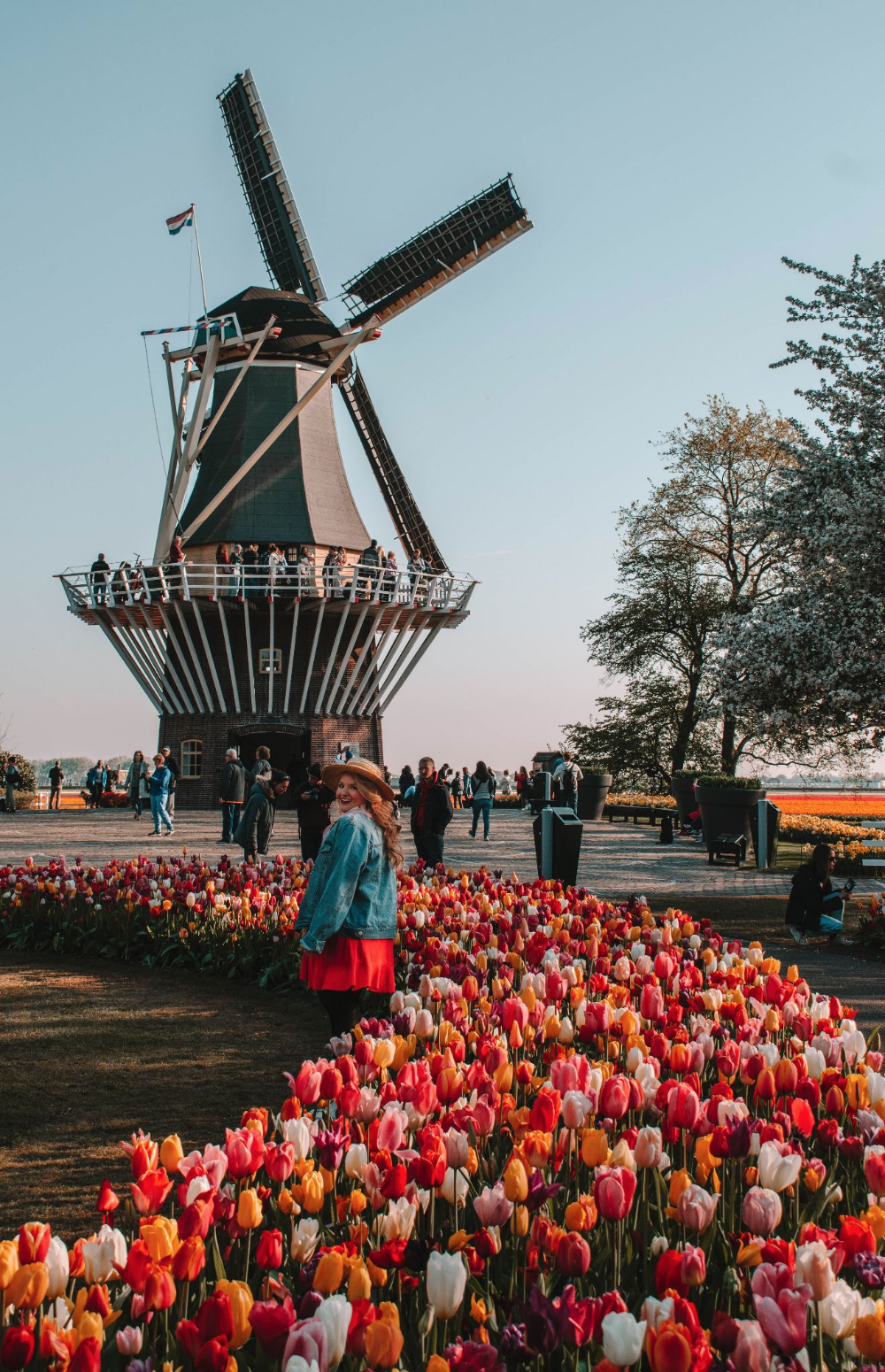 Ultimate Guide to Tulips in Holland - Ke