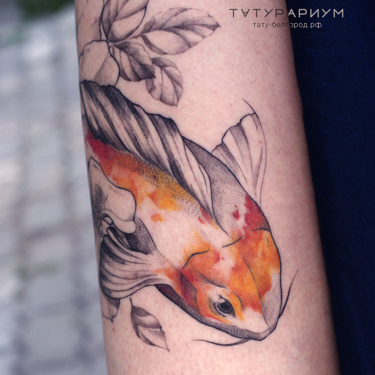 татуировка карпа, в стиле графика, на пл