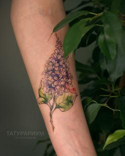 фото татуировки сирени на предплечье у девушки в стиле акварель, графика, тату-салон татур