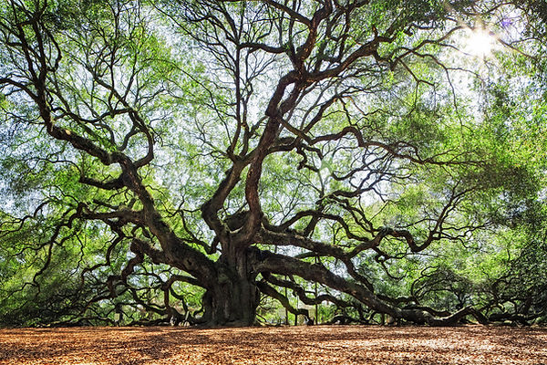 arbre_Calque 1.jpg