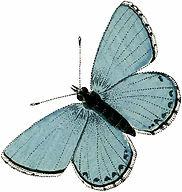 Vintage-Aqua-Blue-Butterfly-Image-Graphi