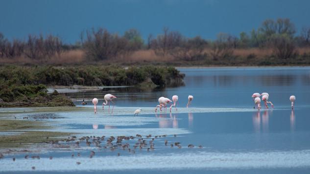 flamingo lagune.jpg