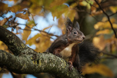 eichhörnchen.jpg