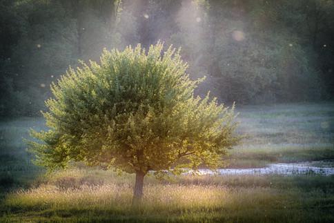 märchenbaum.jpg