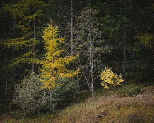 selva_herbstbäume.jpg