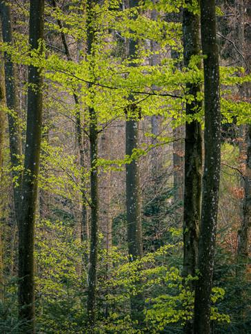 spring_forest.jpg