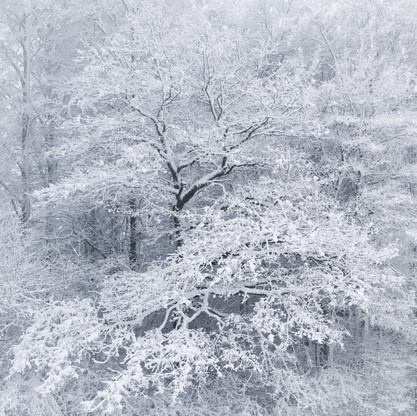 snowcapped.jpg