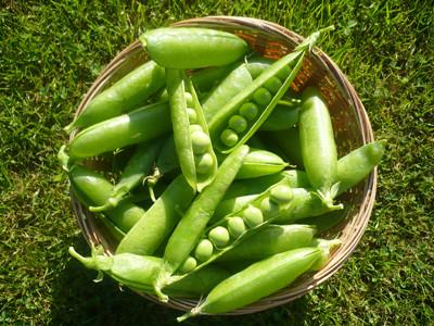 peas_lead.jpg