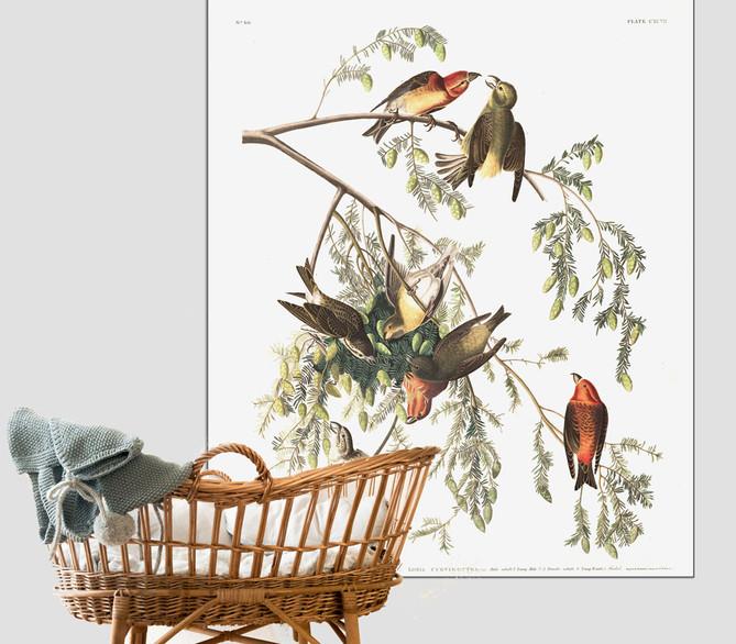 vogeltjes.jpg