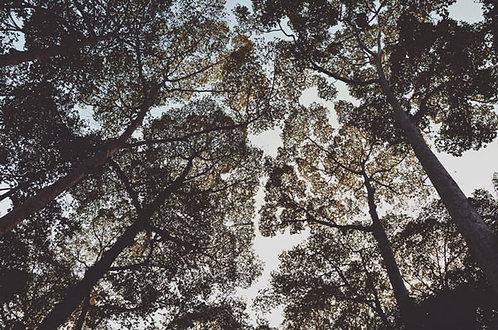 Sky full of trees