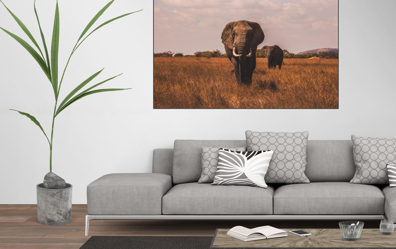 olifanten.jpg
