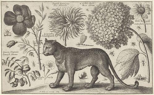 Luipaard bloemen en insecten - Wenceslaus Hollar