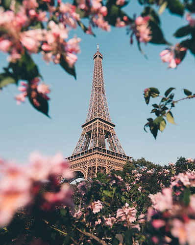 Eiffel Tower blossoms