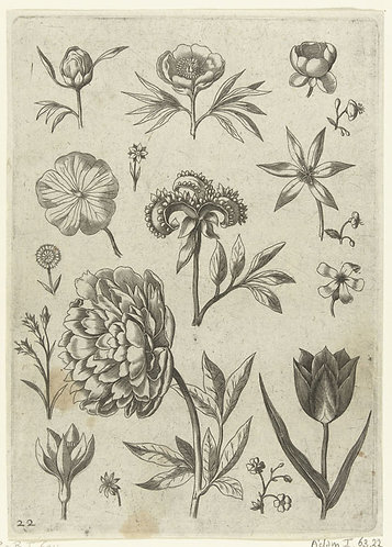 Verschillende bloemen, Adriaen Collaert