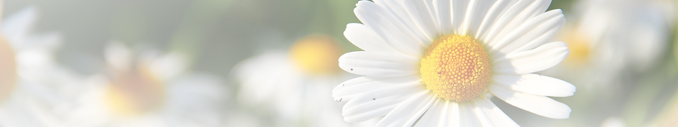 daisies-276112_1920banner.png