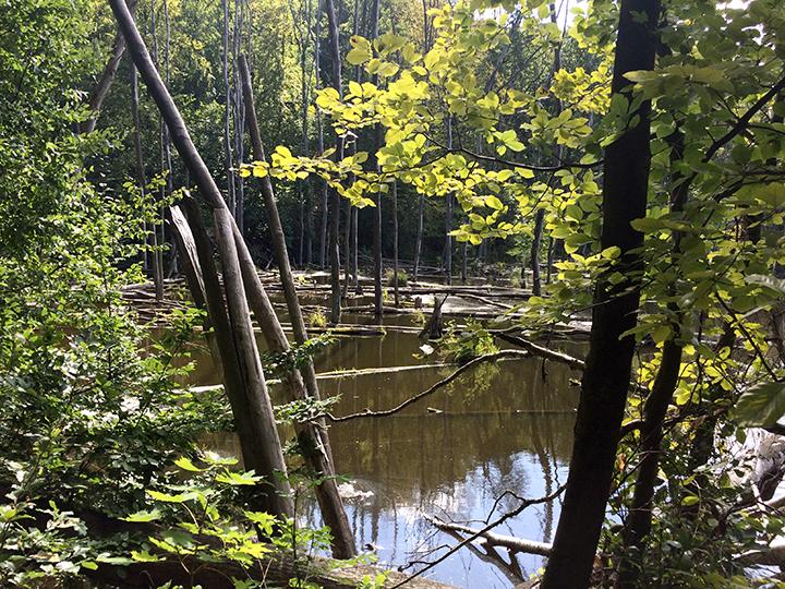 Naturschutzgebiet Plagefenn