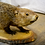 Thumbnail: Taxidermy Rodent