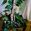 Thumbnail: 7ft Artificial Tree in Bamboo Planter