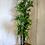 Thumbnail: 8ft Bamboo Tree