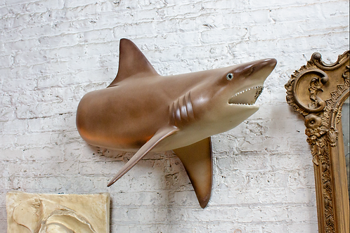Brown Shark