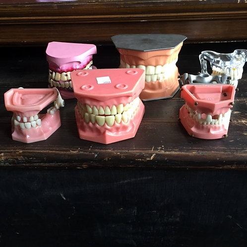 Teeth Dental Models