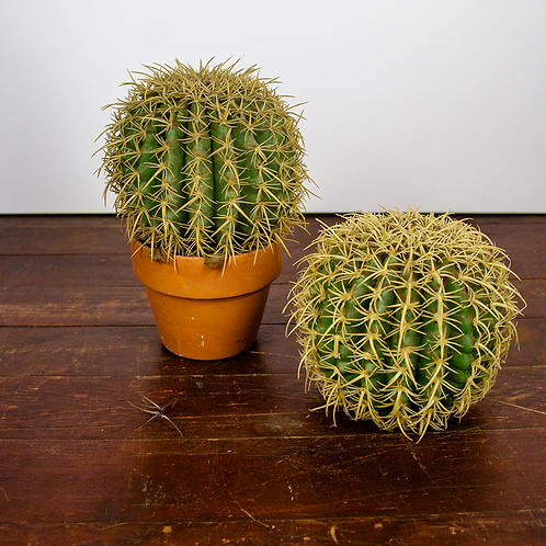 Small Round Cactus Plant