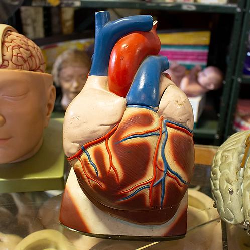 Anatomical Heart Model