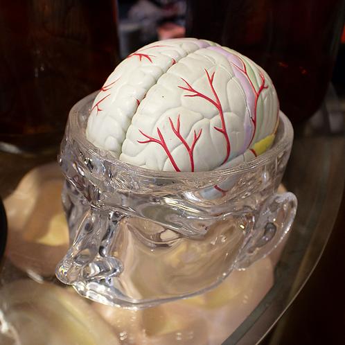 Human Brain Anatomical Model